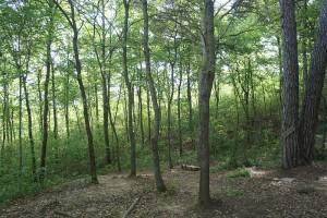 Il bosco umano un albero salva un albero