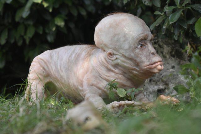 L'uomo cane è uno dei più virali di Laira - anche questa è un'ibridazione futuristica che nel futuro siano possibili degli animali da compagnia dal gusto decisamente Freak